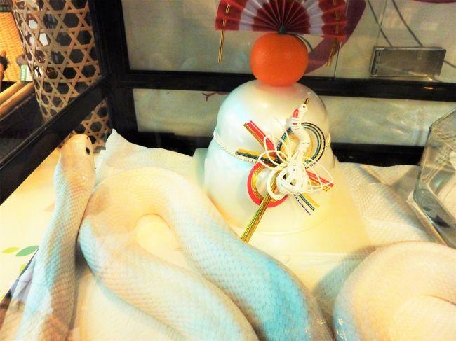 毎年お正月には近所の神社と清荒神にお参りに行きます。<br />今年も無事お参りすることができました。<br />お参りの後に参道にある竹雑貨のお店にいる白蛇ファミリーに会いに行くのも新年の楽しみの一つであります。<br /><br />(蛇の写真ばっかなので、苦手な方はご注意を)