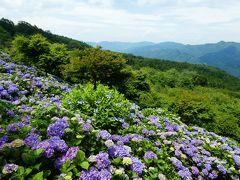 【2020年】リベンジ美の山の紫陽花とパリー食堂LOVE