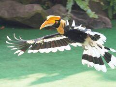 動物ずくめのシンガポールひとり旅 26 バードパーク バードショーの部