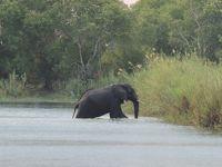 初めてのアフリカ大陸、南部3か国 11日間 3/5 ジンバブエ共和国 ザンベジ川クルーズ