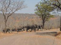 初めてのアフリカ大陸、南部3か国 11日間 4/5  ボツワナ共和国 チョベ国立公園