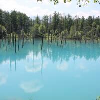 ラベンダーと花畑を楽しむ、富良野から美瑛へ1泊2日の旅(2日目)
