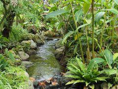 箱根強羅公園 薔薇苑を訪れた後 熱帯植物館に立ち寄りました。その③