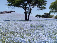 北東北から北関東縦断・桜とネモフィラと藤の花(その3・栃木茨城編)