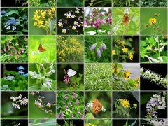◆福島・四季・彩々 Part,89『初夏の野の花』