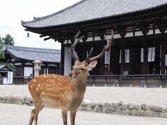 奈良*興福寺~ならまち~ザ・リッツ・カールトン大阪