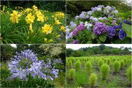 2020年7月 いわき市フラワーセンターで季節の花々を鑑賞 +東北道の駅めぐり05