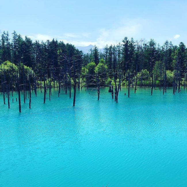 夏の北海道へ2泊3日の家族旅行