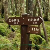 蓼科・岡谷 旅行(1泊)2020年7月 ① 白駒の池と苔・滝の湯