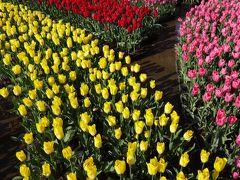 元気な花たちを愛でる・早春の足利フラワーパーク