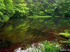 梅雨の 奥入瀬・蔦沼めぐり