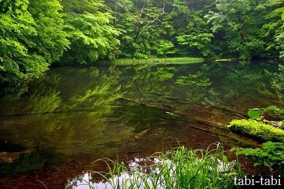 コロナの移動自粛解除にともない、密を避けつつ<br />梅雨時の 青森を 選んでみた。。。<br />     八甲田 と 蔦沼めぐり & 奥入瀬渓流に 十和田湖<br /><br />宿泊施設も新幹線も、混んでる感じはない。<br />天気予報も 曇り空。。。<br /><br />温泉で のんびり するか・・・   思い立ったら いざ 出発!!<br /><br />しかし、宿は そこそこの 混雑ぶりで 天気も 雨続き・・・ <br />あぁ~ ちょっと 残念 だったかな。。<br /><br /><br />新幹線で16時43分に、新青森駅に着いた。。。<br />ここで在来線に乗り換え 16時58分発で、青森駅に向かう。<br /><br /> Hotel JAL City に 荷物を置いて<br />さっそく、夕暮れの 青森を 散策しよう。