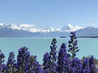 ニュージーランド 南島 ルピナス街道 ⑩ (ミルキーブルーの2つの湖、テカポ湖&プカキ湖)