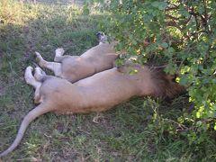 ぶらり東アフリカ・ケニア編−危険な匂い漂う大都会ナイロビと動物天国サファリ−