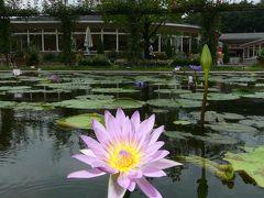 「あしかがフラワーパーク」の夏の花(5)_2020_スイレンが増えています(栃木県・足利市)
