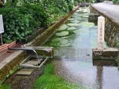 武生・鯖江の旅行記