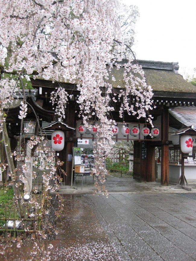 古都お花見・京都滞在二日目は龍安寺方面に行きましょう。<br /><br />インクラインで写真を撮っていたら、いきなり地元の方が「あんた!何写してんの!!」と怒りの声が・・<br />「景色です、カメラの映像確認しますか」(自分は瞬間湯沸かし器ですが、優しく言いましたよ)と言うと「急いでいるから」と去って行きました。<br />一体何だったのか??<br />きっと大勢の観光客が来て、ところかまわず写真を撮って迷惑しているのかな?<br /><br />母は失礼な!!と凄く怒っていましたが、気にしないで楽しく行こうね。<br />