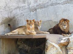 【日立市かみね動物園 2018/6訪問③】