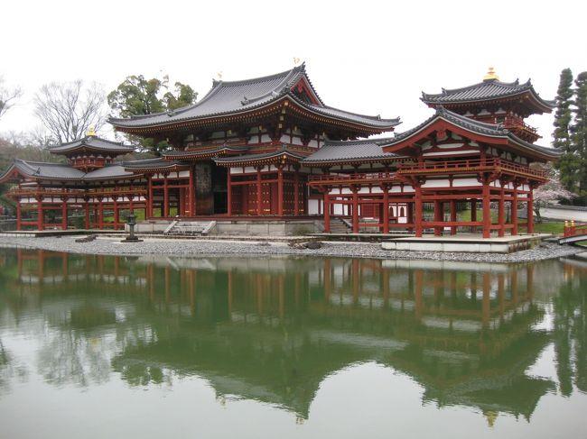今年のお花見は古都・奈良と京都で楽しむぞ~京都編三日目