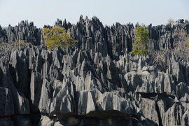 マダガスカル10日間の旅(4)大ツィンギー・ハイキング(ベマラハ国立公園)