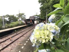 アジサイの季節に箱根を再訪