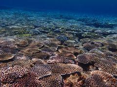 石垣島で3日間ダイビング ~サンゴが元気でした~