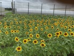 旧秋田県農業試験場周辺を歩く