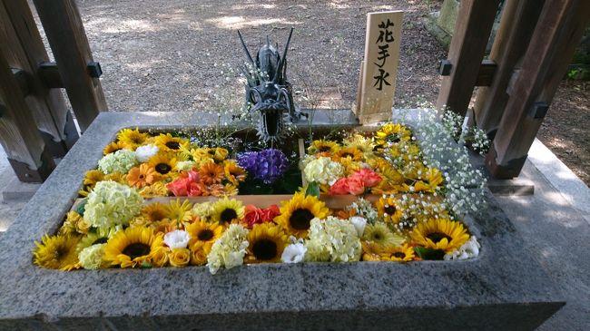 新型コロナウイルスの感染防止のため神社の入り口にある手水の使用ができなくなりました。使わないのならば手水鉢に花を生けようという取り組みが初めて行われました。花で受けつくされた手水鉢。全部で9か所ある神社をすべて回ります。