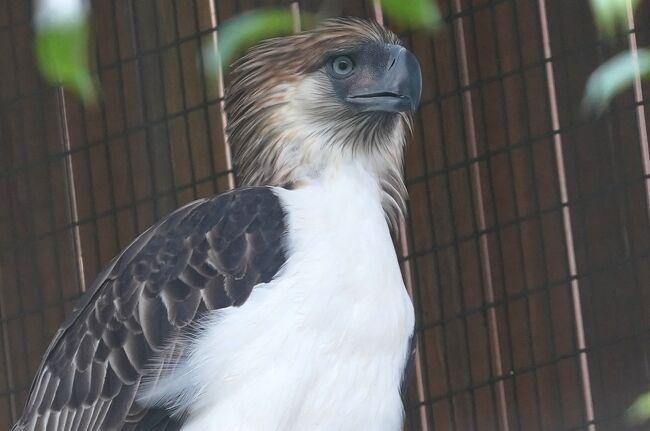動物ずくめのシンガポールひとり旅 28 バードパーク 希少な鷲の部