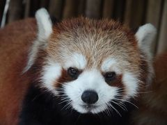 富山市ファミリーパーク&いしかわ動物園 真夏でも意外としっかり屋外展示をしている北陸2園を訪問・・・やはりロッポパパに似ている令和兄弟