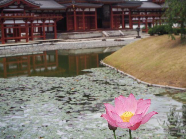 2020夏、京都、奈良そして伊勢神宮 2日目宇治~仁和寺、美味ご飯
