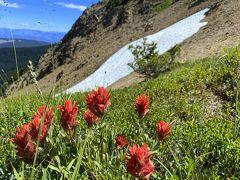 ずっと続くお花畑をハイキング マンニングパーク