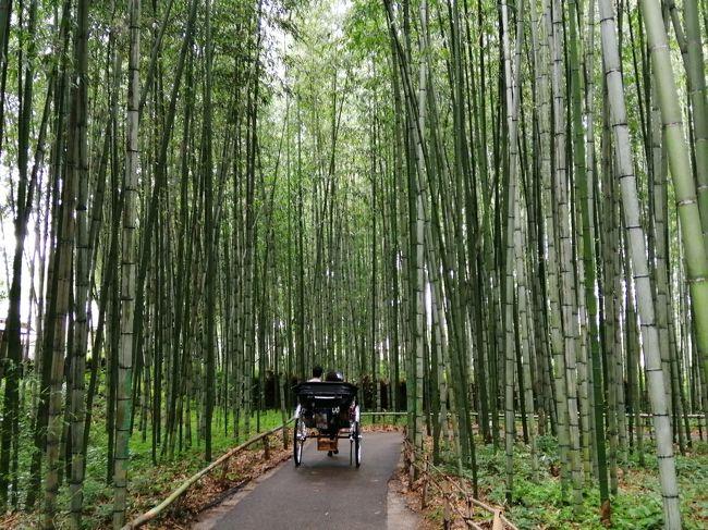 2020夏の京都 その2は嵐山&嵯峨野観光ととことんツイていない娘