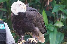 動物ずくめのシンガポールひとり旅 31 バードパーク 空の王の部