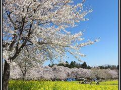 千本桜、猿ヶ京温泉へ。