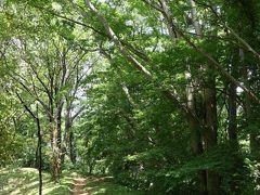 夏の佐倉城址公園