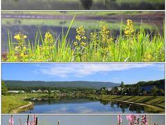 羽鳥湖高原