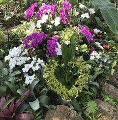 花を求めて 母と一緒に三陽フラワーミュージアムそしてホテルザマンハッタンにお泊まり