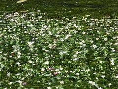 梅花藻~黒壁スクエア