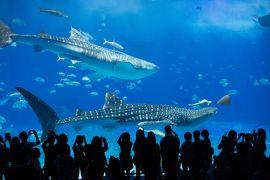 行っ得!!沖縄4日間の旅2019 美ら海水族館編