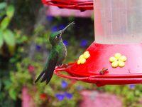 中米の旅(3)コスタリカ モンテベルデ自然保護区
