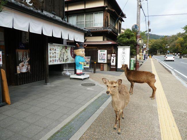 緊急事態宣言が発表される前、観光客のいなくなった奈良公園に行ってきました。<br />まさかの大失敗もありましたが、美しい桜と、穏やかで優しい顔の鹿たちに癒されまくりの旅でした。<br />