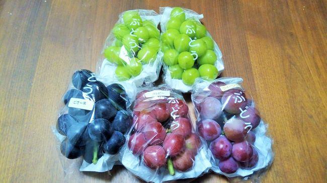 ぶどう狩りではなく、ぶどうを買いにいってきました。