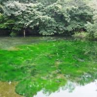 静岡~山梨~長野 湖水と森をめぐる旅 静岡~富士五湖編