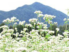2020年9月福島県下郷町猿楽台地のそば畑と観音沼、養鱒公園で鱒を食べてきました。