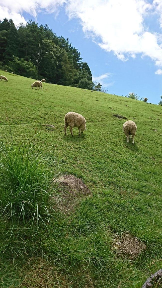 8月はどこにも行かなかったけど、9月は私の誕生日にあわせて一泊しようかなと計画!<br />兵庫県内でゴーツートラベルキャンペーンを利用して<br />出来るだけ近い所って検察していたら、オテル・ド摩耶がヒットしたのでそこに決まり!<br /><br />観光は六甲山周辺ですが、意外と行ったことがないことに気づきました。