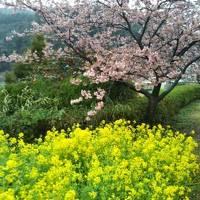 クラブツーリズムで早春伊豆半島と富士山ドライブの旅3日間