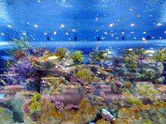 JALどこかにマイルで日帰り那覇にまいる☆DMMかりゆし水族館・美らSUNビーチ