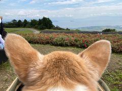 琵琶湖の見える丘