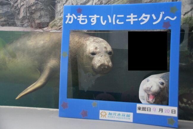 クラゲの水族館でキタゾウアザラシに会ってきたお話 3 アシカとアザラシの部